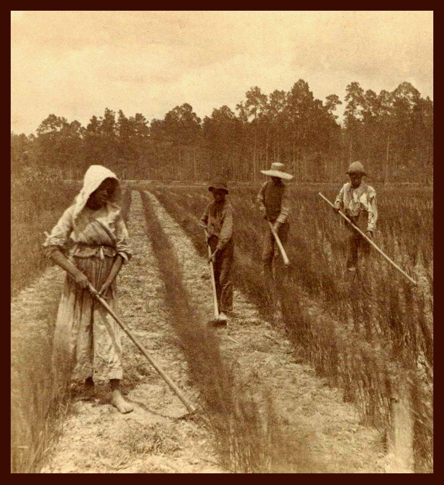 rice_field_slaves