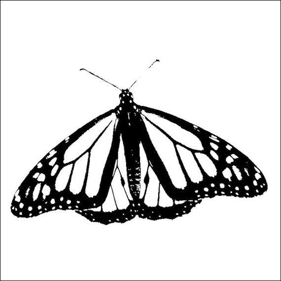 570pxbutterfly 2