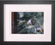 ammonite_1_517px