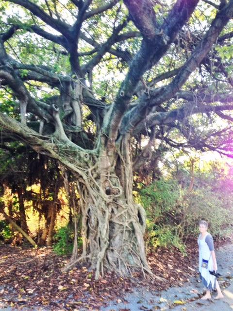 lyric_ftLauderdale_tree