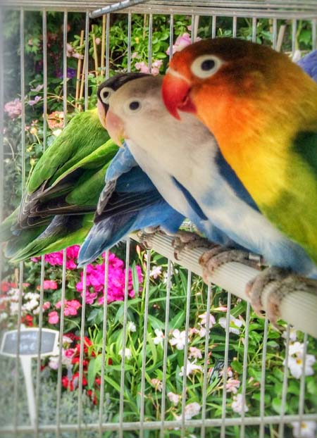 paris-bird_market06