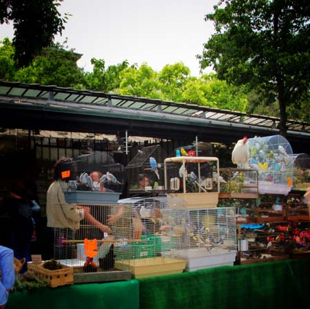 paris-bird_market07